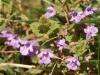 spring-bloom-2