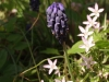 spring-bloom-3