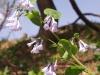 spring-bloom-5