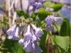 spring-bloom-6