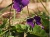 spring-bloom-7