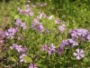 spring-bloom-4