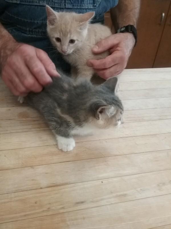 Kittens seeking adoption